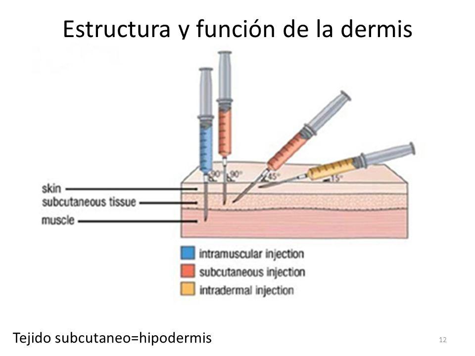Estructura y función de la dermis