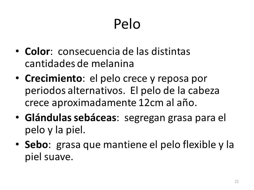 Pelo Color: consecuencia de las distintas cantidades de melanina
