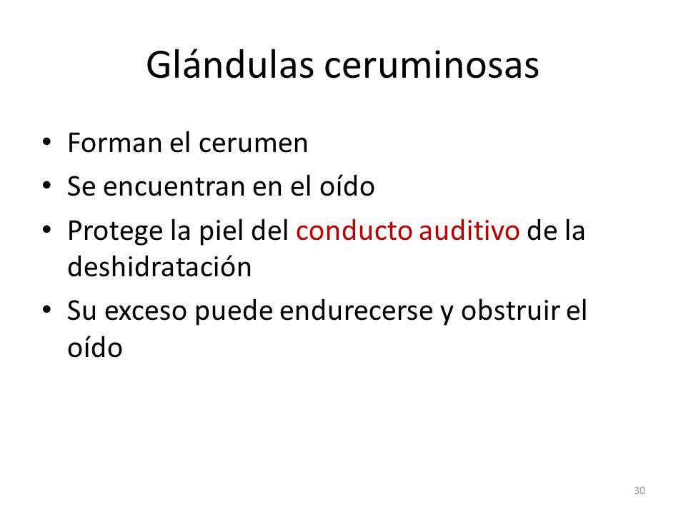 Glándulas ceruminosas