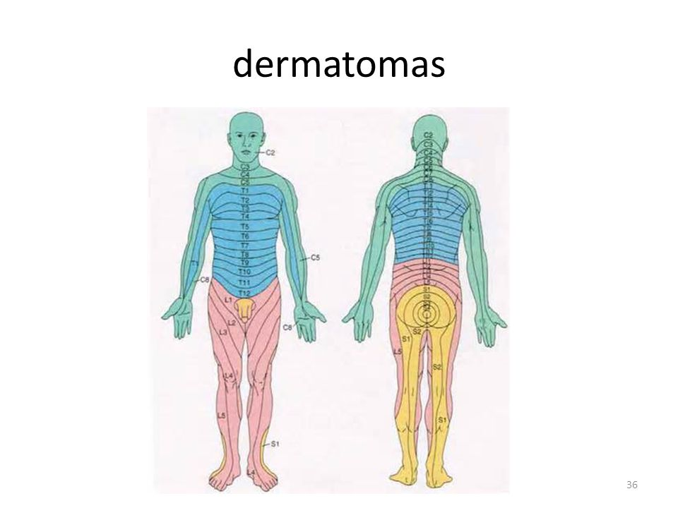 dermatomas
