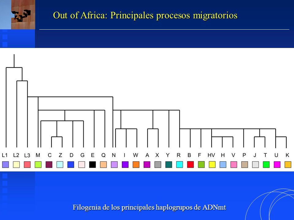 Filogenia de los principales haplogrupos de ADNmt