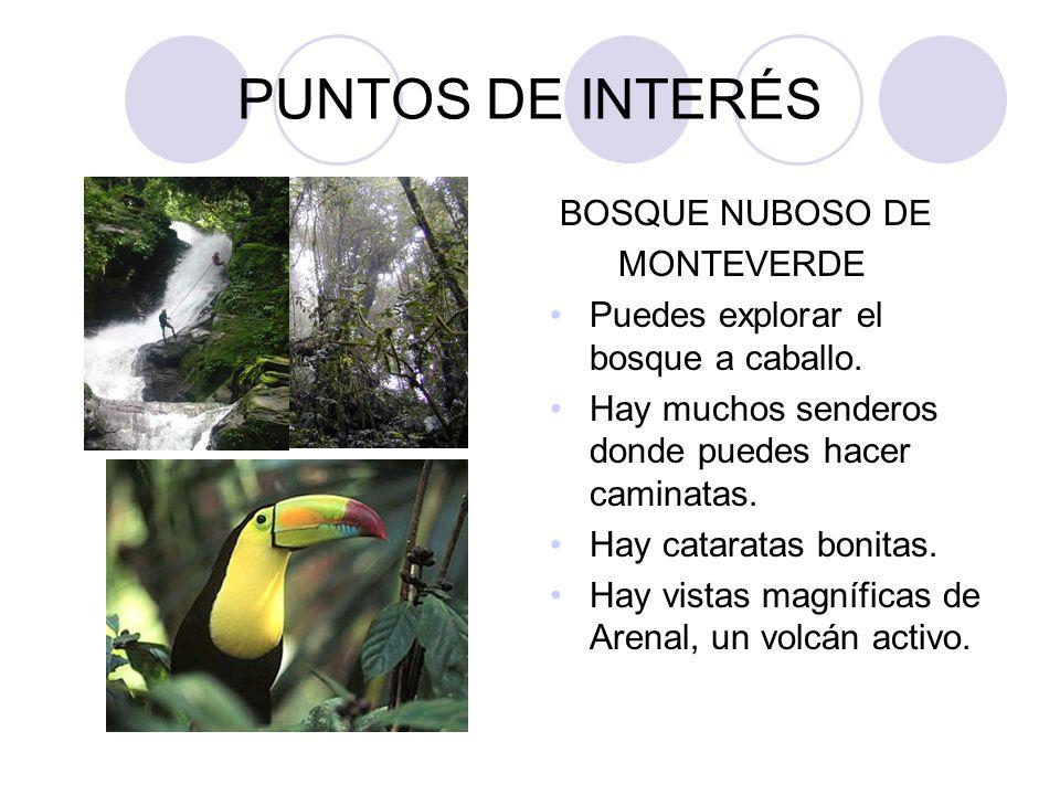 PUNTOS DE INTERÉS BOSQUE NUBOSO DE MONTEVERDE