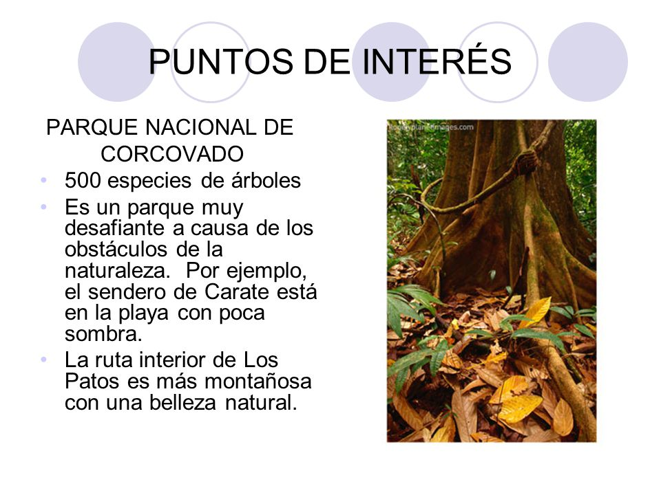 PUNTOS DE INTERÉS PARQUE NACIONAL DE CORCOVADO 500 especies de árboles