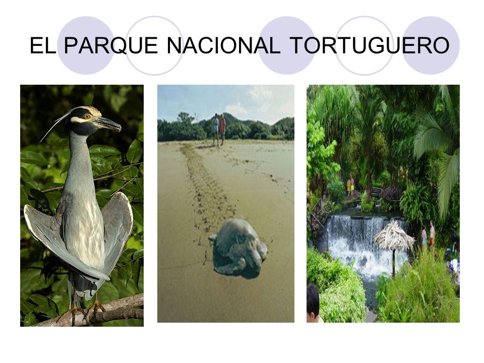 EL PARQUE NACIONAL TORTUGUERO
