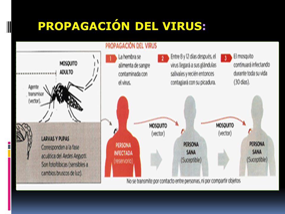 PROPAGACIÓN DEL VIRUS: