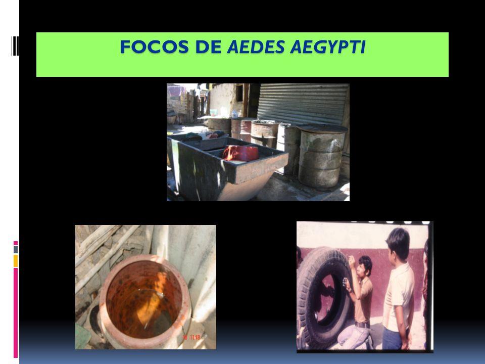 FOCOS DE AEDES AEGYPTI