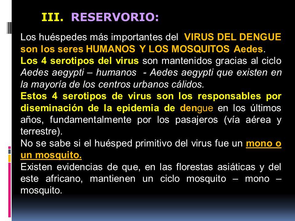 III. RESERVORIO: Los huéspedes más importantes del VIRUS DEL DENGUE son los seres HUMANOS Y LOS MOSQUITOS Aedes.