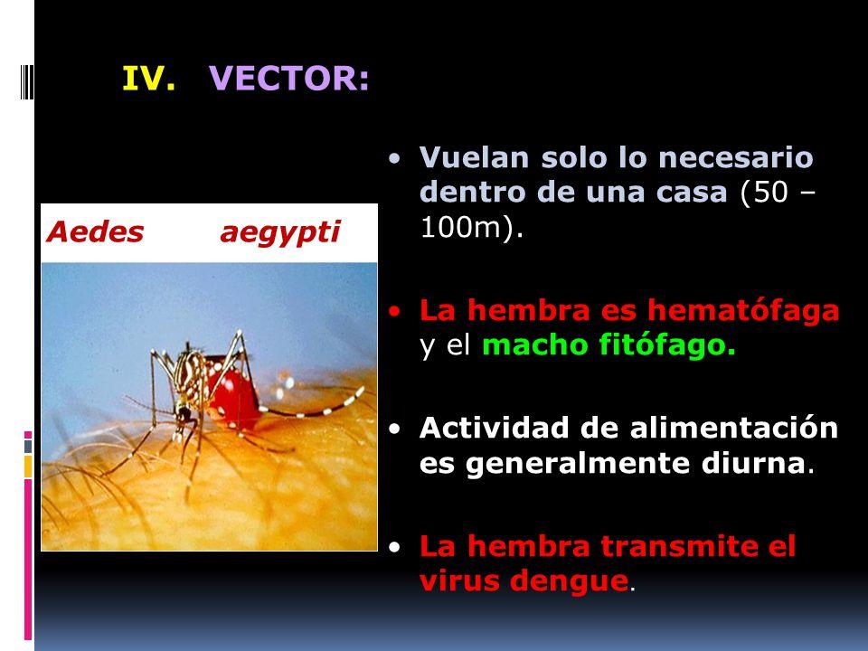 IV. VECTOR: Vuelan solo lo necesario dentro de una casa (50 – 100m).