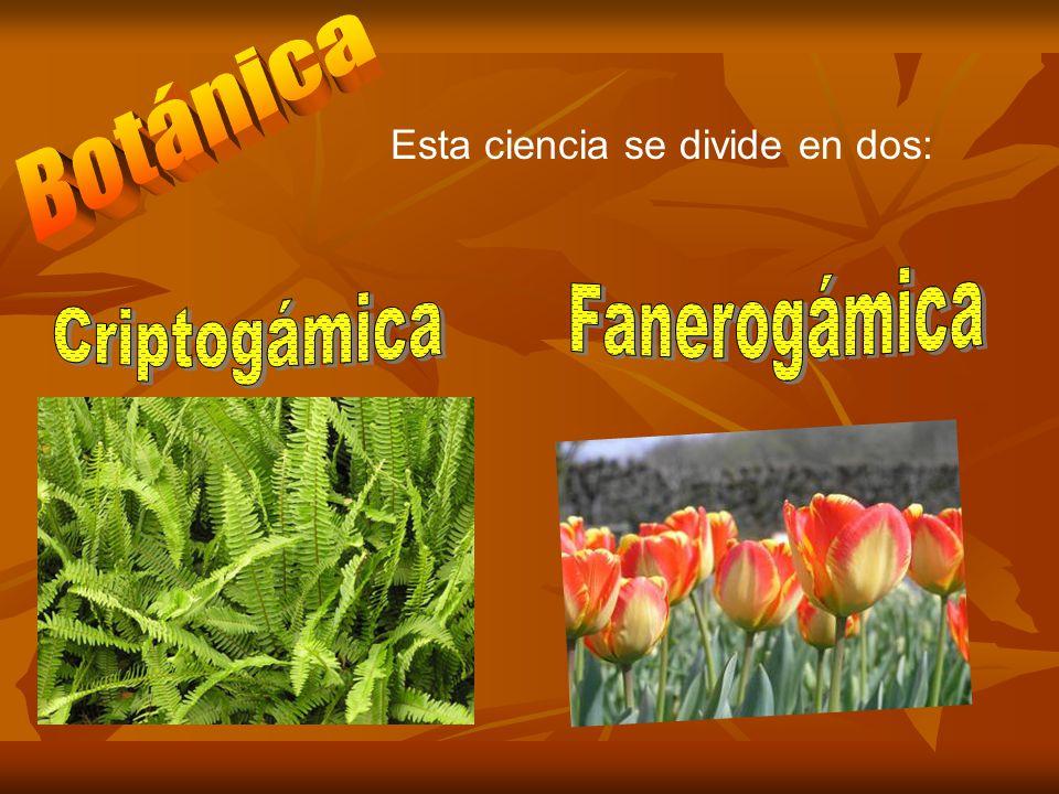 Botánica Esta ciencia se divide en dos: Fanerogámica Criptogámica