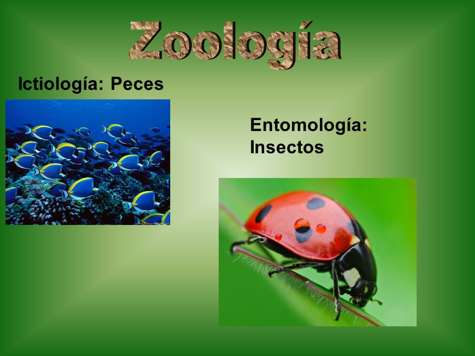Zoología Ictiología: Peces Entomología: Insectos