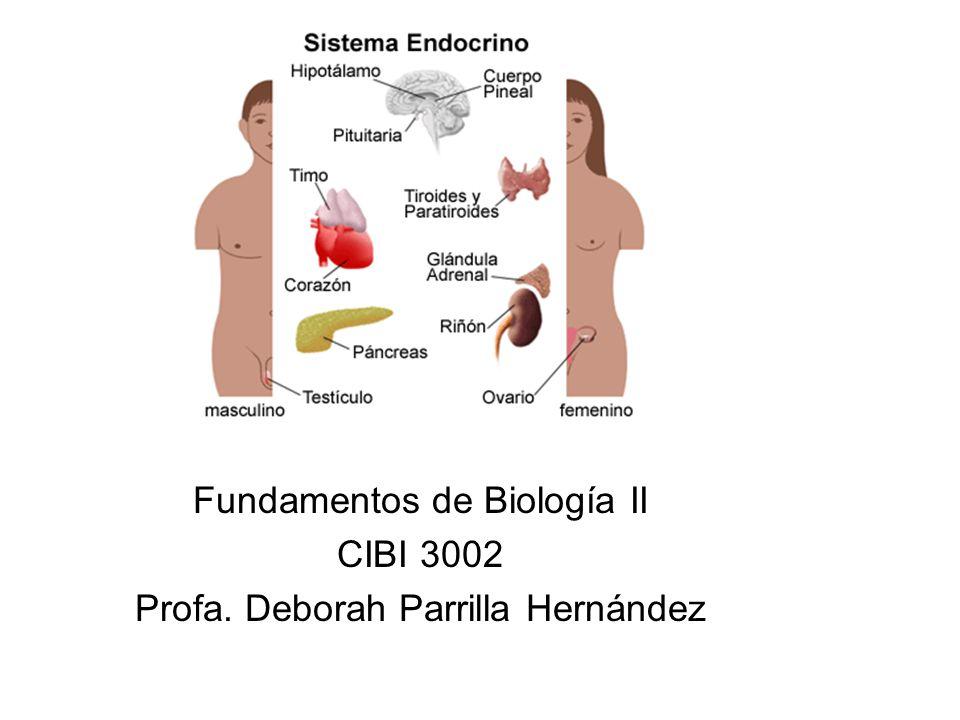 Fundamentos de Biología II CIBI 3002 Profa. Deborah Parrilla Hernández