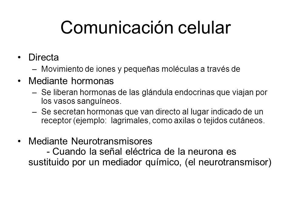Comunicación celular Directa Mediante hormonas