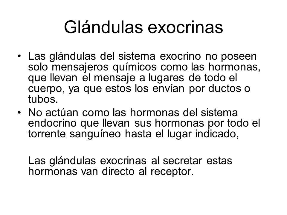 Glándulas exocrinas