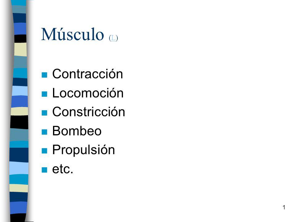 Músculo (L) Contracción Locomoción Constricción Bombeo Propulsión etc.