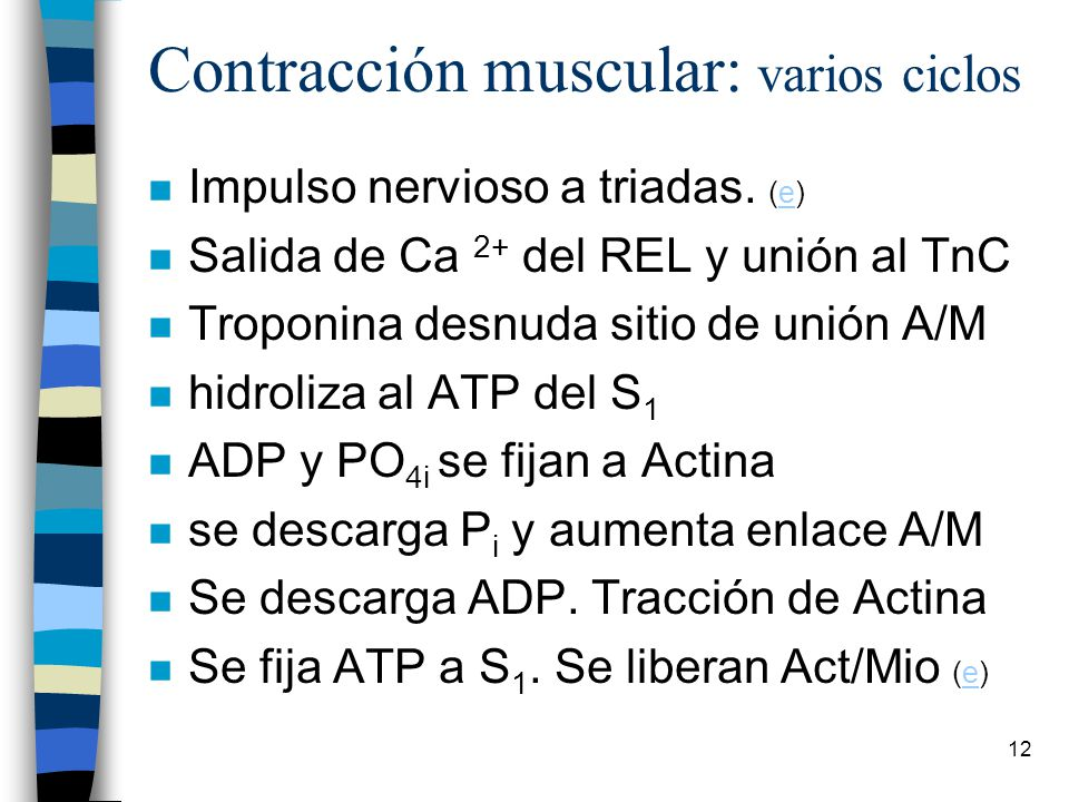 Contracción muscular: varios ciclos
