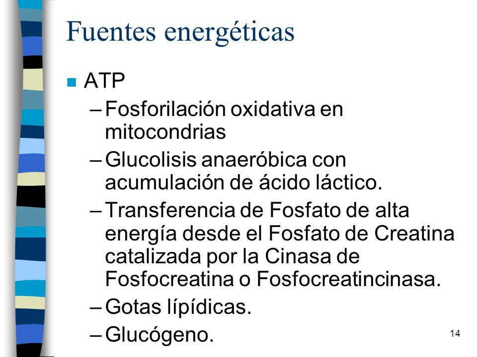 Fuentes energéticas ATP Fosforilación oxidativa en mitocondrias