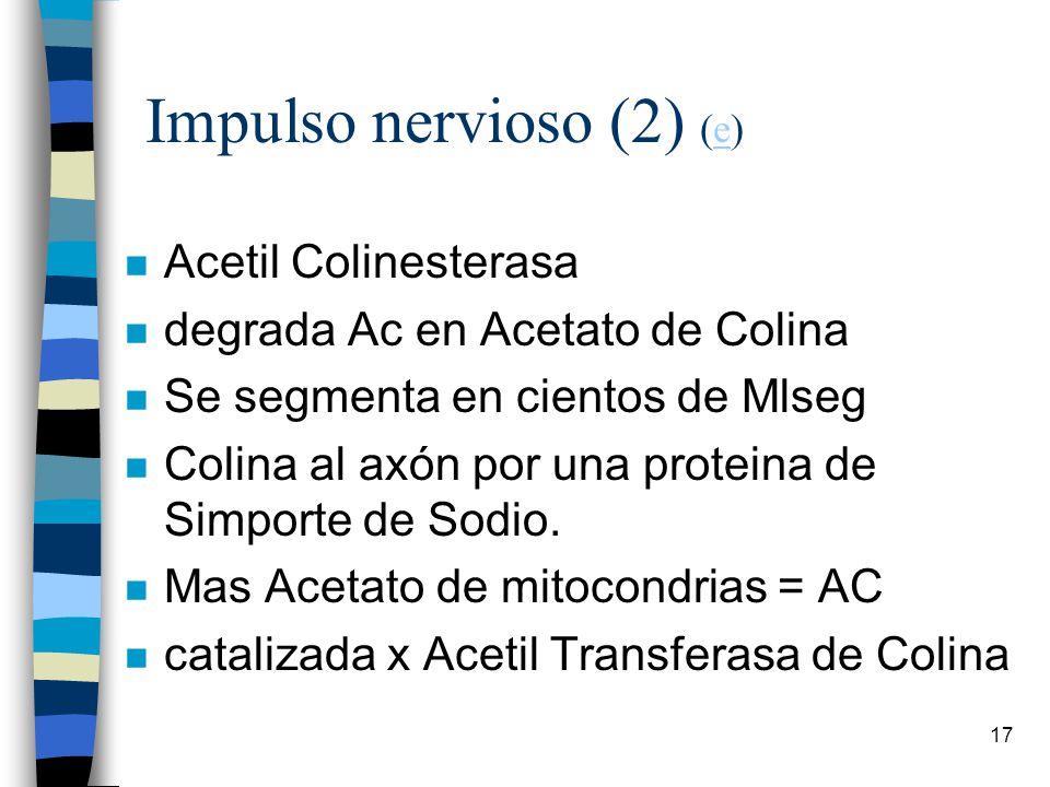 Impulso nervioso (2) (e)