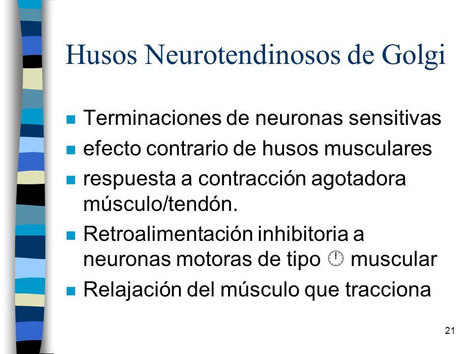 Husos Neurotendinosos de Golgi