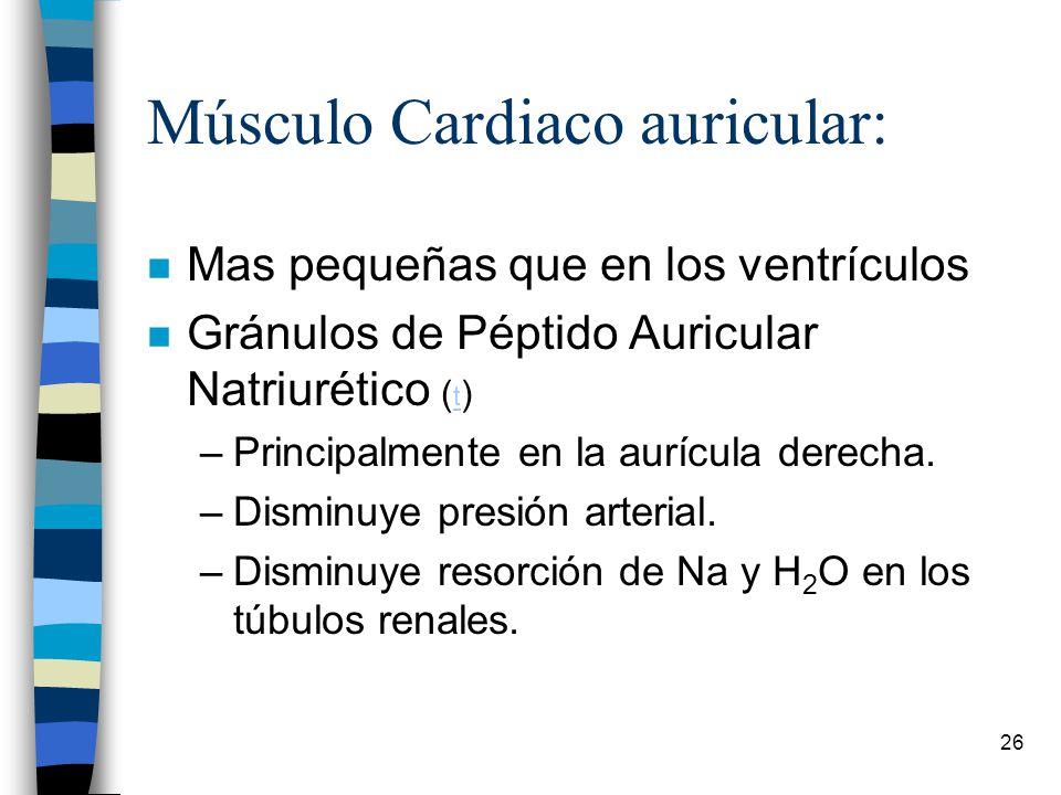 Músculo Cardiaco auricular: