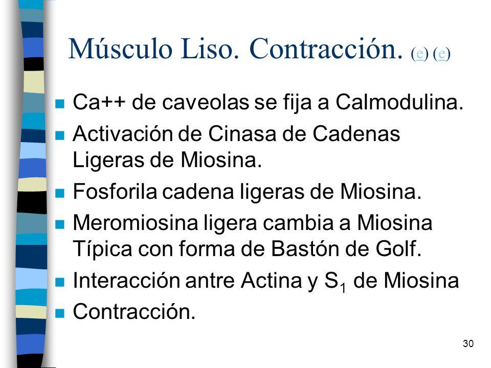 Músculo Liso. Contracción. (e) (e)