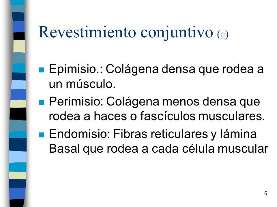 Revestimiento conjuntivo (e)