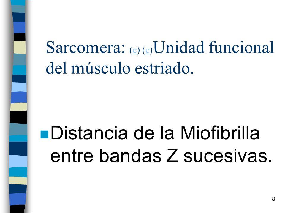 Sarcomera: (e) (e)Unidad funcional del músculo estriado.