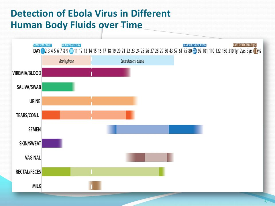 Detection of Ebola Virus in Different Human Body Fluids over Time
