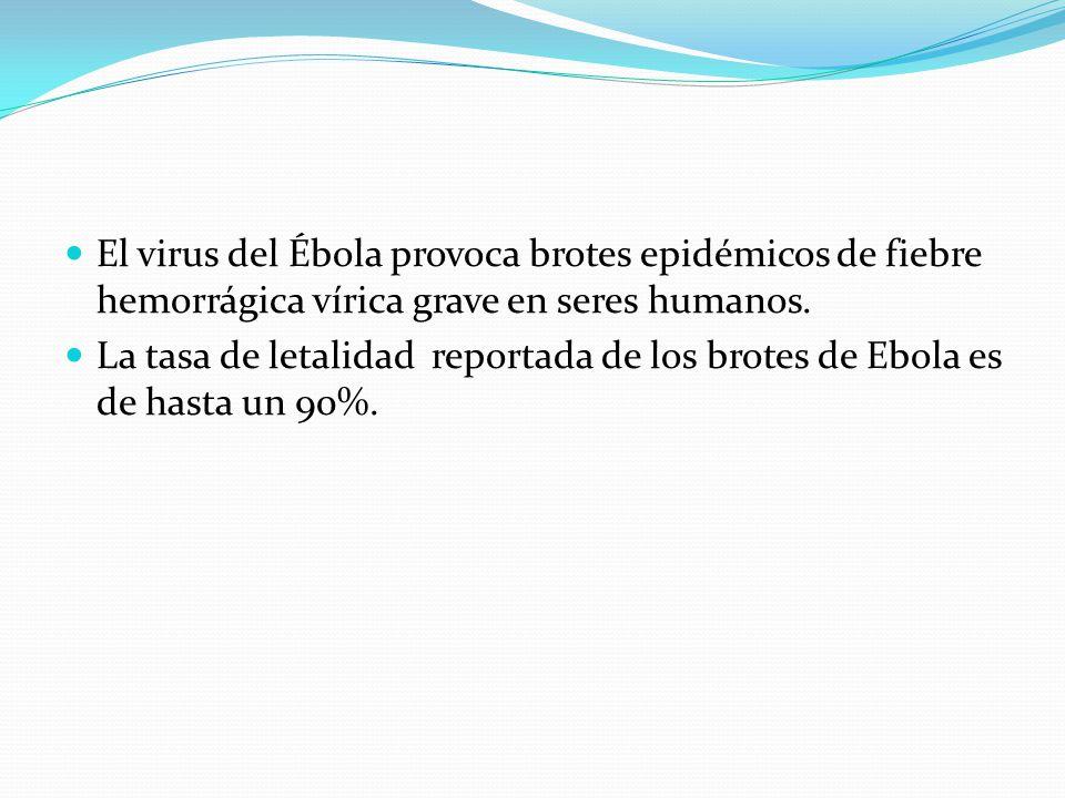 El virus del Ébola provoca brotes epidémicos de fiebre hemorrágica vírica grave en seres humanos.