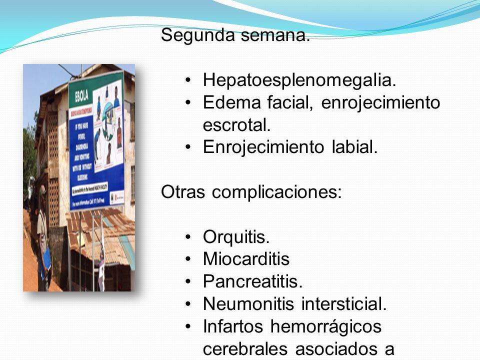 Segunda semana. Hepatoesplenomegalia. Edema facial, enrojecimiento escrotal. Enrojecimiento labial.