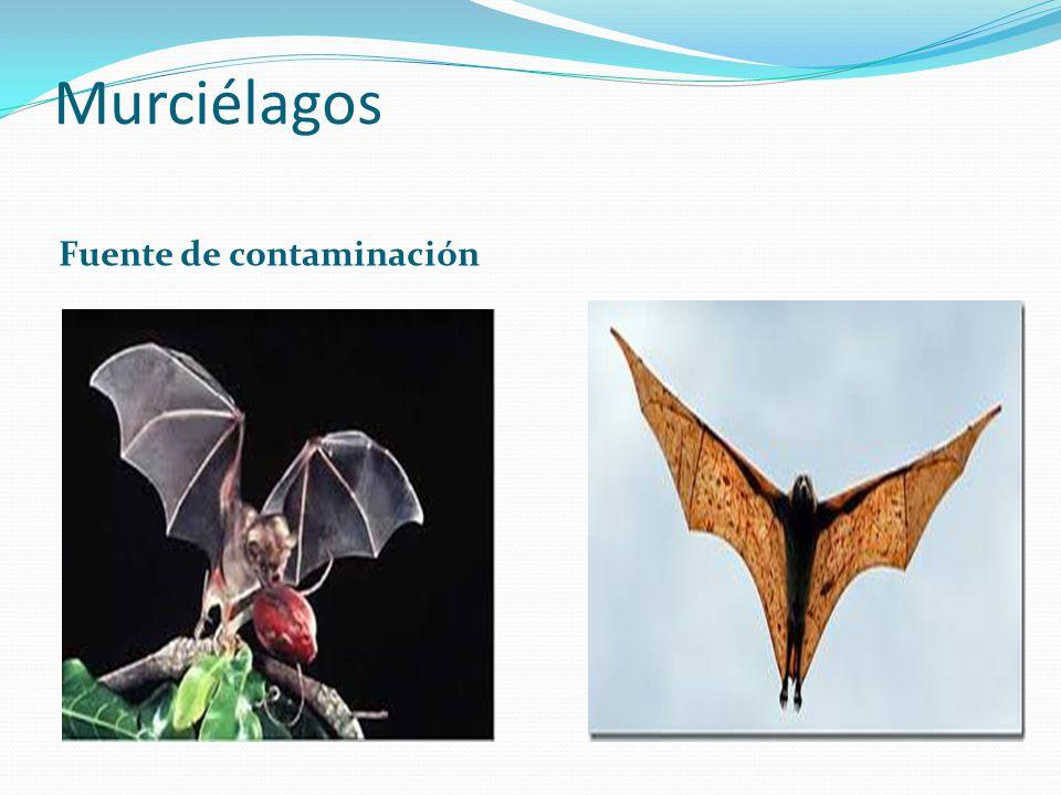 Murciélagos Fuente de contaminación