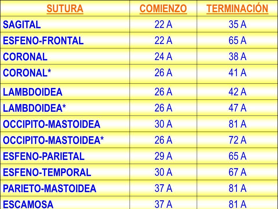 SUTURA COMIENZO. TERMINACIÓN. SAGITAL. 22 A. 35 A. ESFENO-FRONTAL. 65 A. CORONAL. 24 A. 38 A.