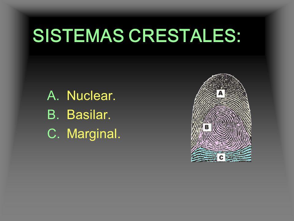 SISTEMAS CRESTALES: Nuclear. Basilar. Marginal.