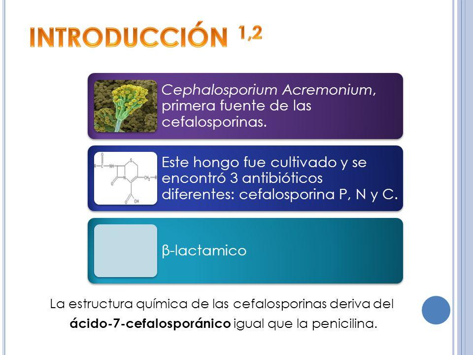 INTRODUCCIÓN 1,2 Cephalosporium Acremonium, primera fuente de las cefalosporinas.