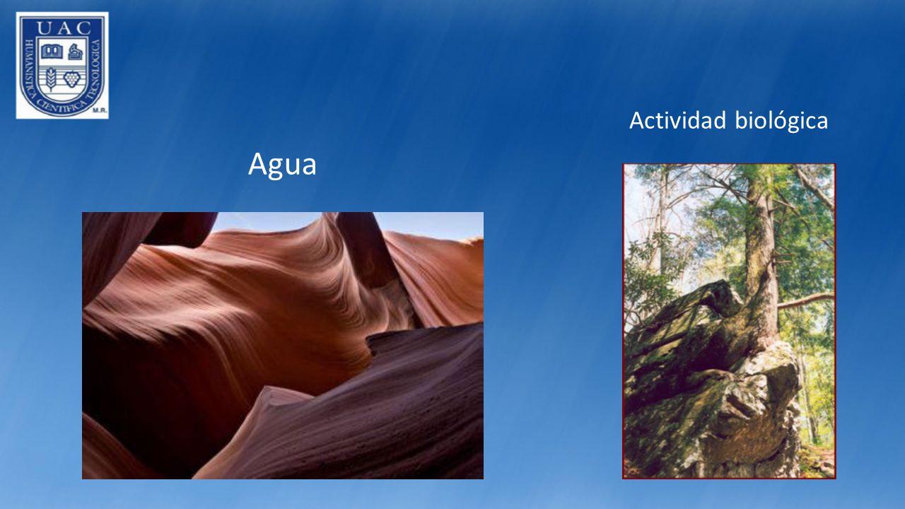 Actividad biológica Agua
