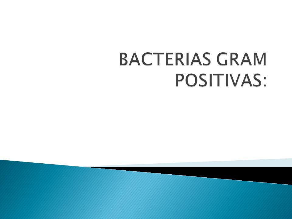 BACTERIAS GRAM POSITIVAS: