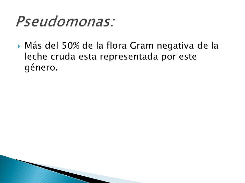Pseudomonas: Más del 50% de la flora Gram negativa de la leche cruda esta representada por este género.