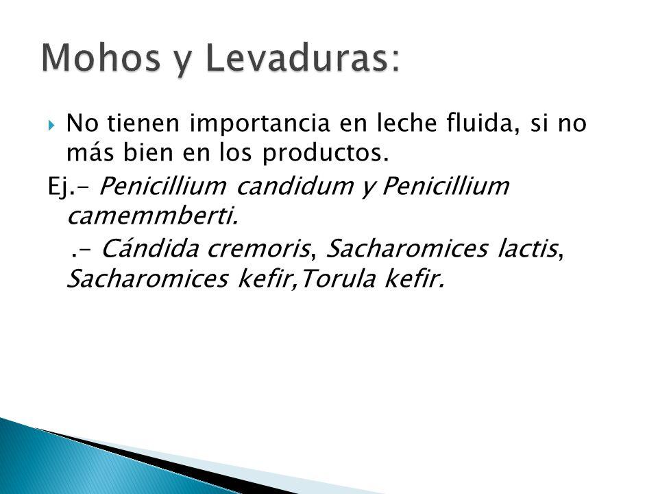 Mohos y Levaduras: No tienen importancia en leche fluida, si no más bien en los productos. Ej.- Penicillium candidum y Penicillium camemmberti.