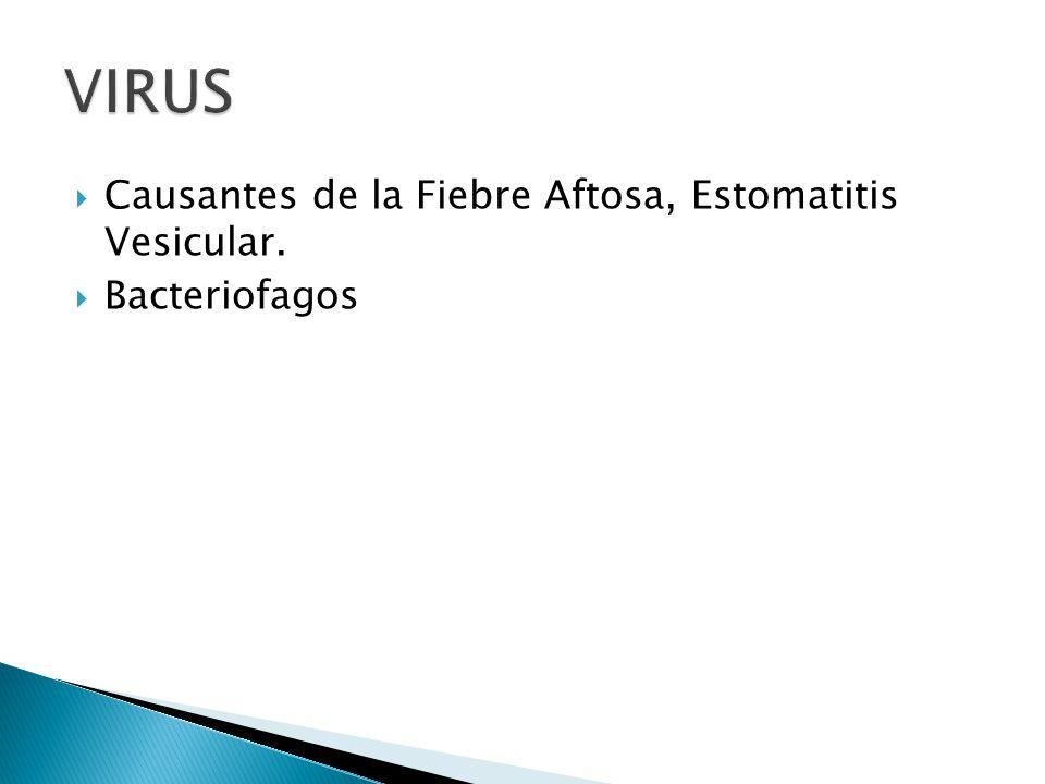 VIRUS Causantes de la Fiebre Aftosa, Estomatitis Vesicular.