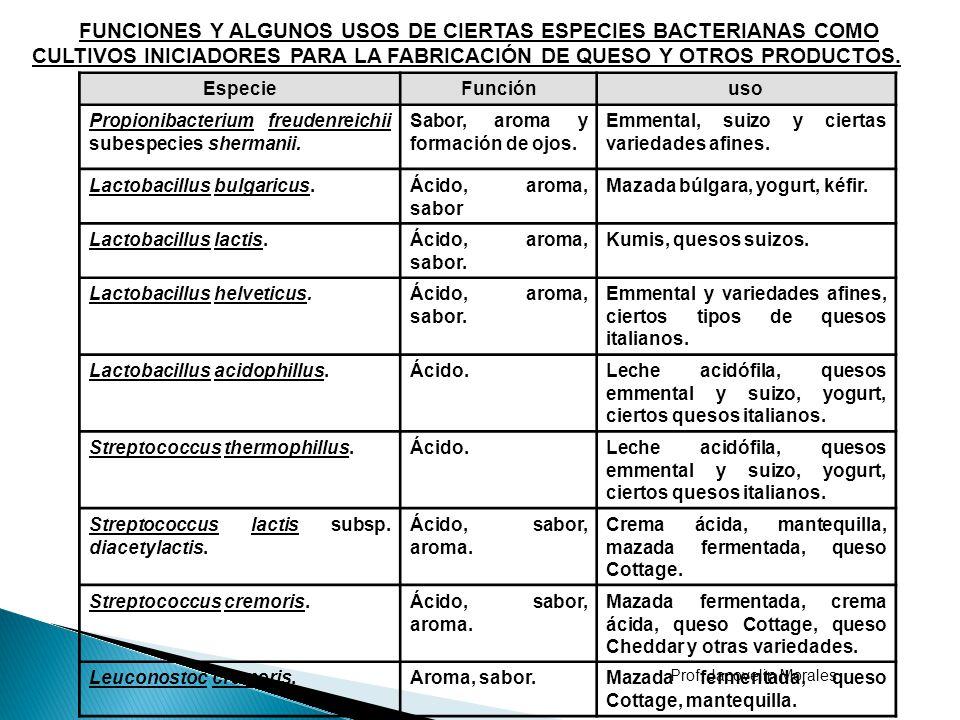 FUNCIONES Y ALGUNOS USOS DE CIERTAS ESPECIES BACTERIANAS COMO CULTIVOS INICIADORES PARA LA FABRICACIÓN DE QUESO Y OTROS PRODUCTOS.