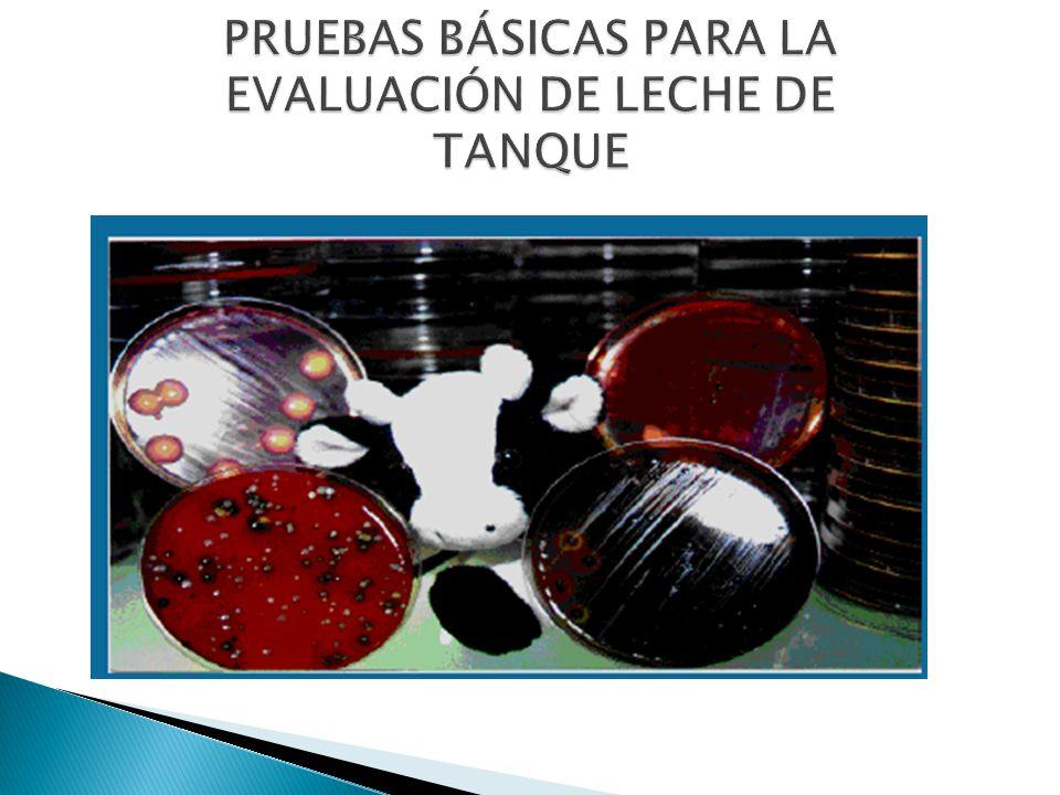 PRUEBAS BÁSICAS PARA LA EVALUACIÓN DE LECHE DE TANQUE