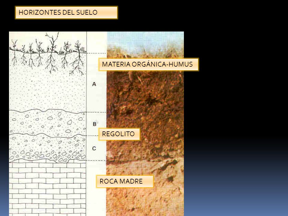 HORIZONTES DEL SUELO MATERIA ORGÁNICA-HUMUS REGOLITO ROCA MADRE