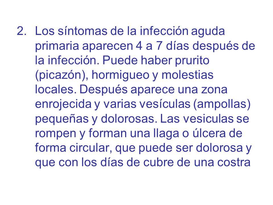 Los síntomas de la infección aguda primaria aparecen 4 a 7 días después de la infección.