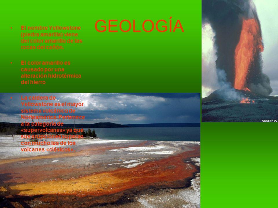 GEOLOGÍA El nombre Yellowstone (piedra amarilla) viene del color amarillo de las rocas del cañón.