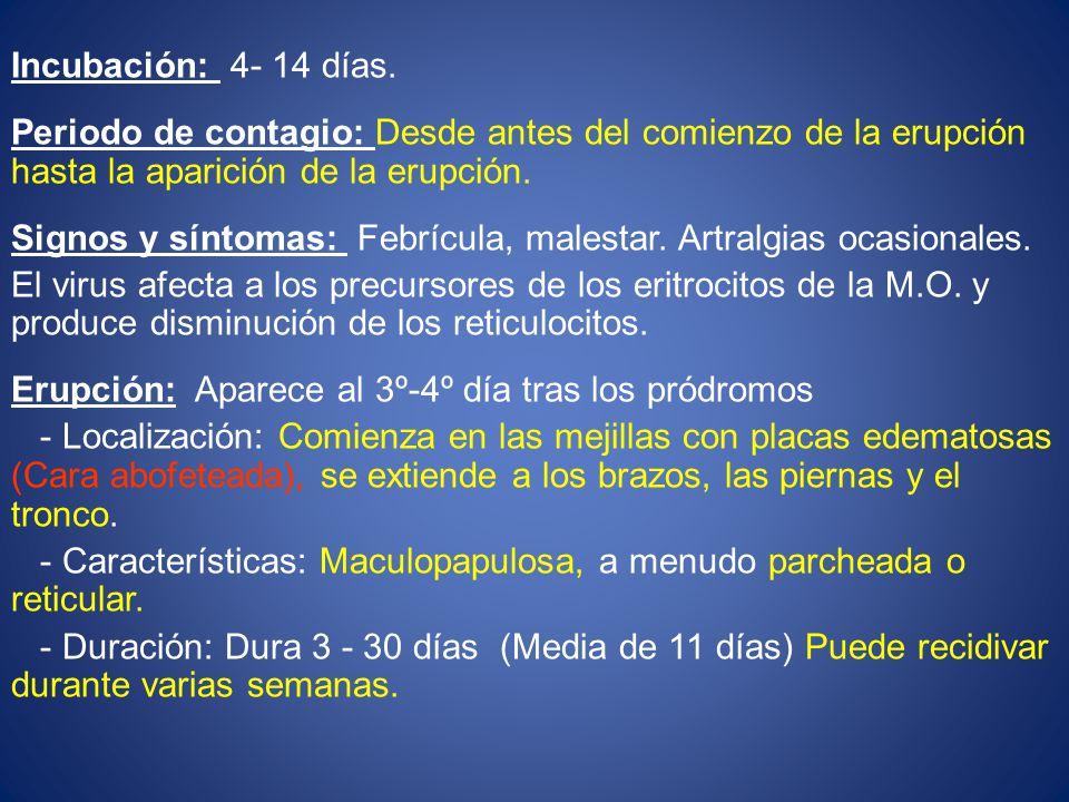 Incubación: 4- 14 días. Periodo de contagio: Desde antes del comienzo de la erupción hasta la aparición de la erupción.