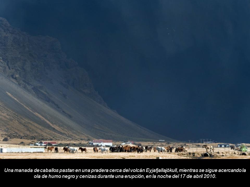 Una manada de caballos pastan en una pradera cerca del volcán Eyjafjallajökull, mientras se sigue acercando la ola de humo negro y cenizas durante una erupción, en la noche del 17 de abril 2010.