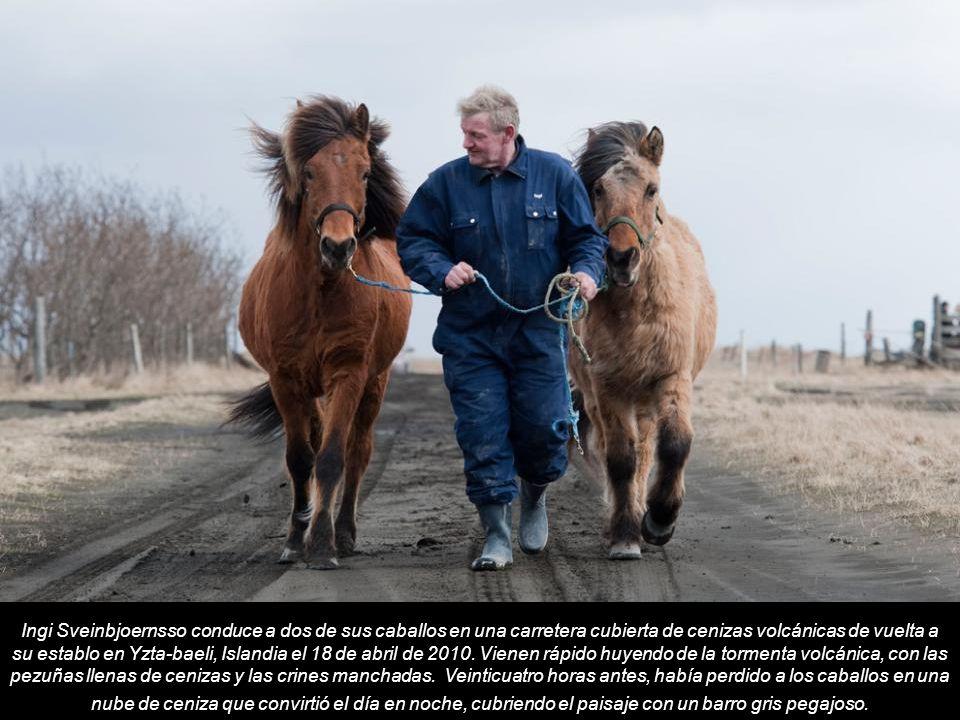 Ingi Sveinbjoernsso conduce a dos de sus caballos en una carretera cubierta de cenizas volcánicas de vuelta a su establo en Yzta-baeli, Islandia el 18 de abril de 2010.