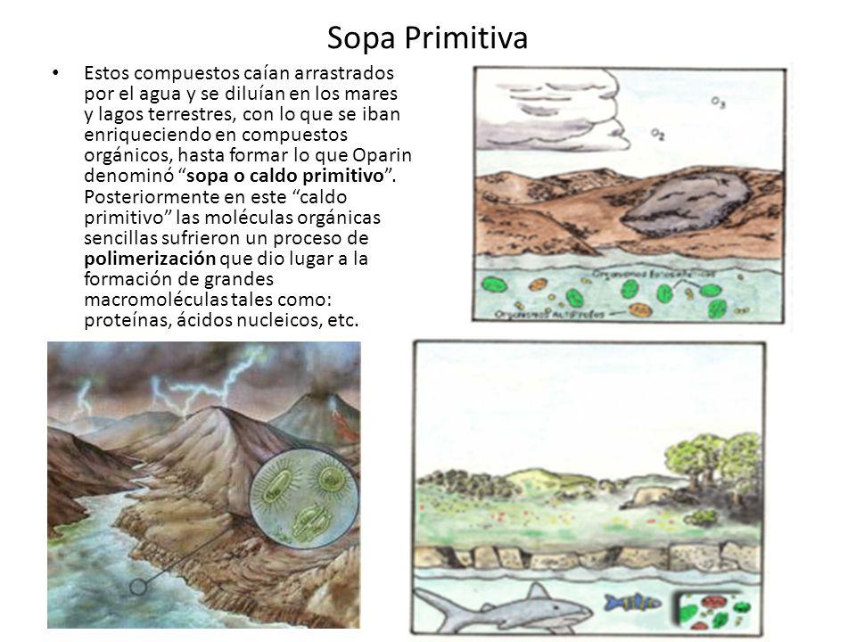 Sopa Primitiva