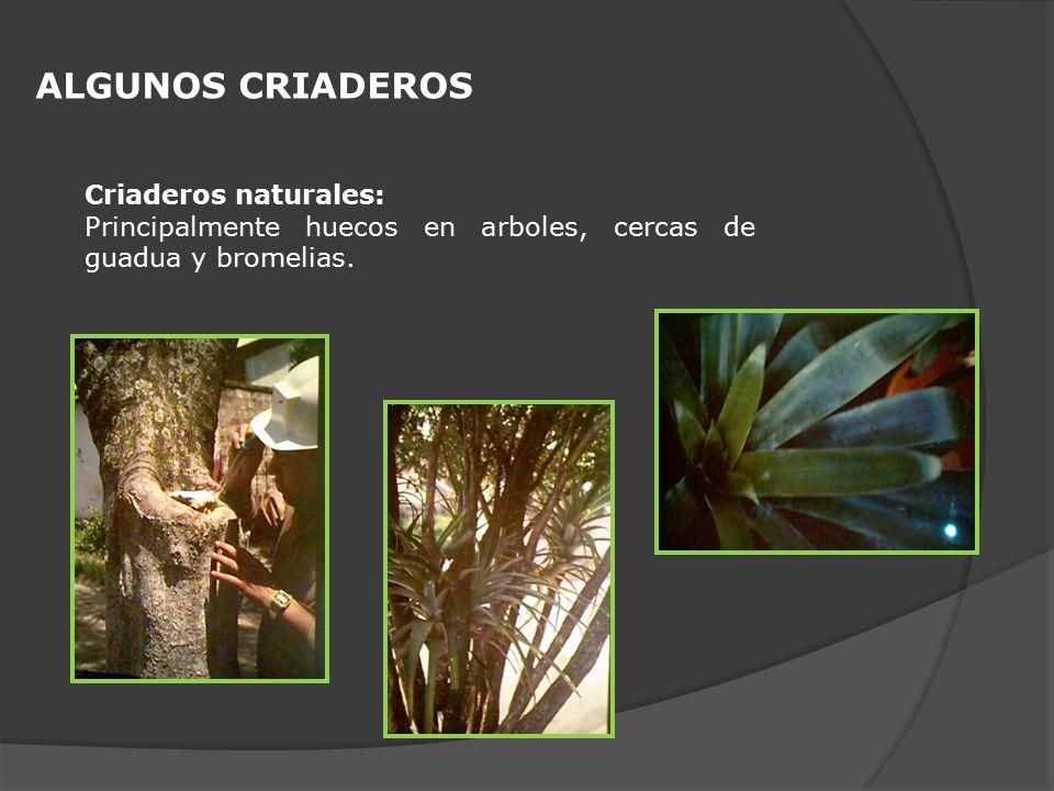 ALGUNOS CRIADEROS Criaderos naturales: