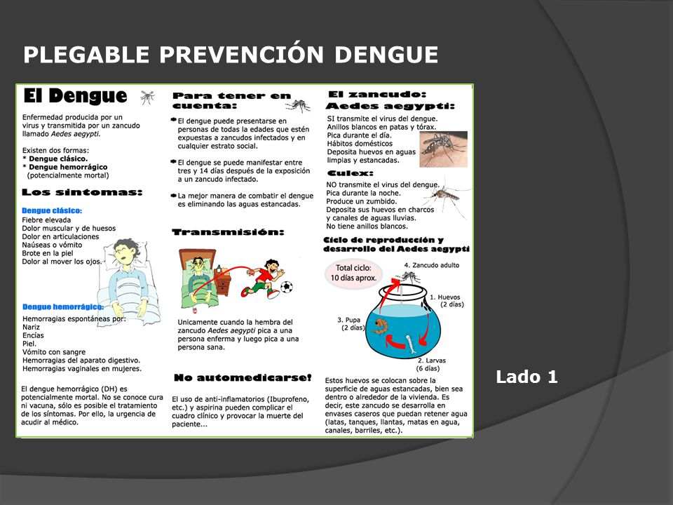 PLEGABLE PREVENCIÓN DENGUE