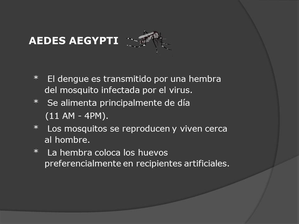 AEDES AEGYPTI * El dengue es transmitido por una hembra del mosquito infectada por el virus. * Se alimenta principalmente de día.